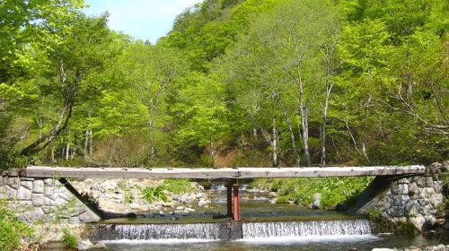 みなかみ町/水上温泉/観光情報/奥利根水源の森